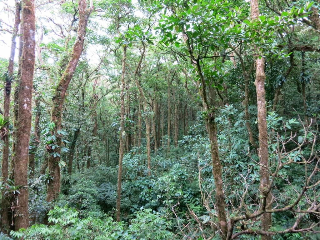 monteverde - 5